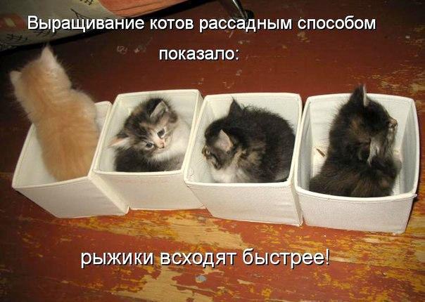 http://cruzworlds.ru/fans/img/user_pics/165_20170209005947.jpg
